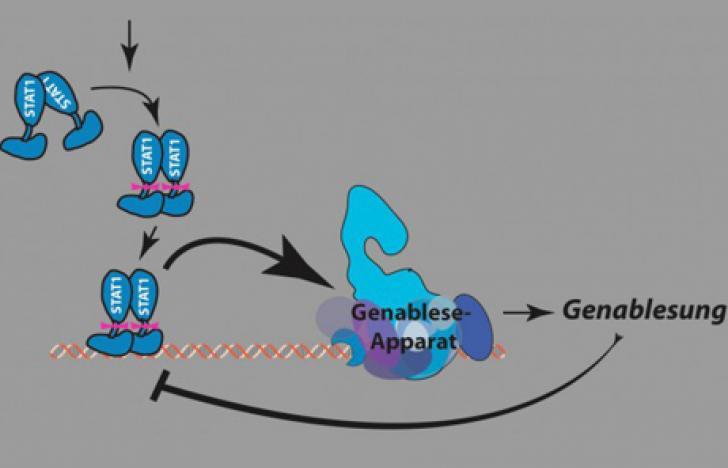 Prozessoptimierung in der Zelle