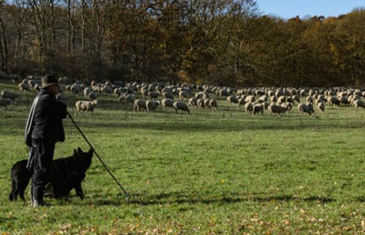 Vom Schafhirten bis zum Forscher