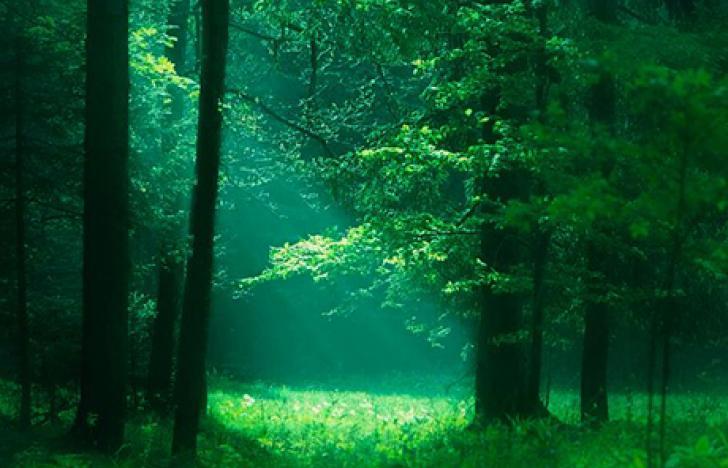 Grüne Ideen gesucht