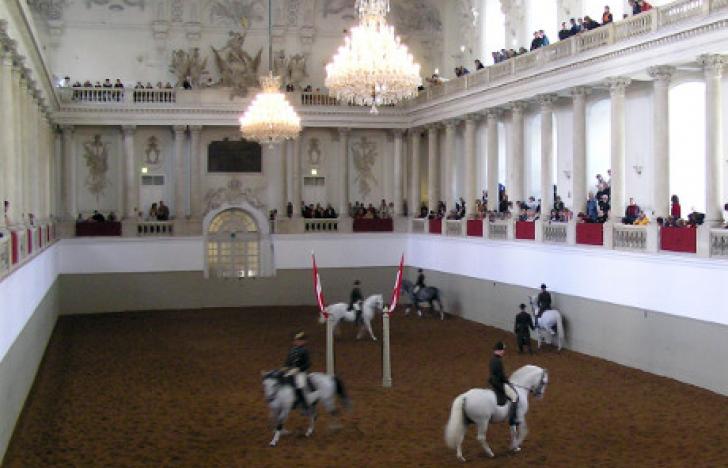 Eine App für Traditions- und Pferdepflege