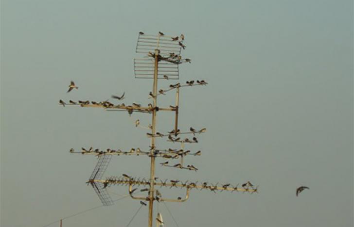 Neue Mobilfunkgeneration braucht viele neue Antennen